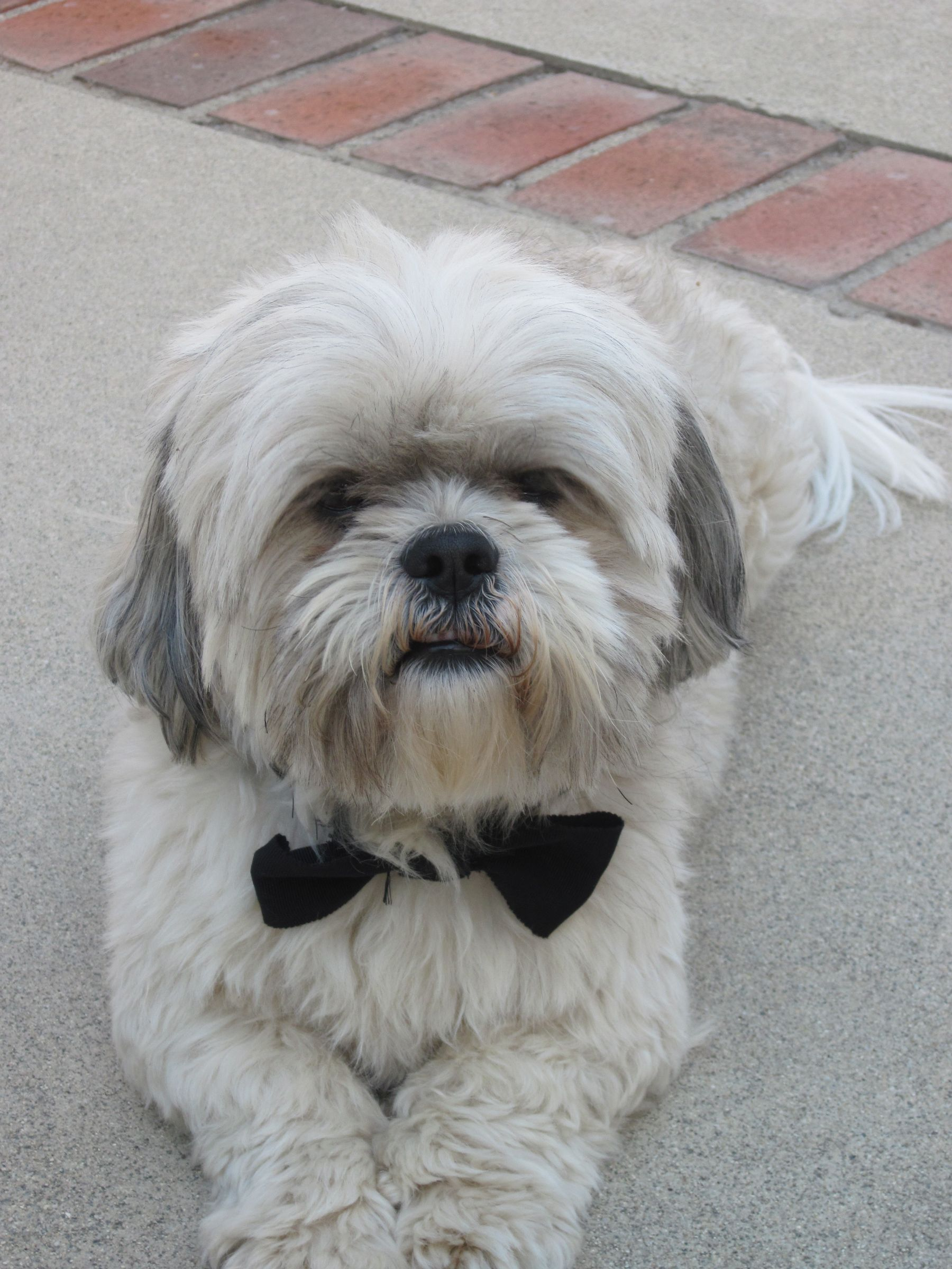Shih Tzu | Review Of My Dog